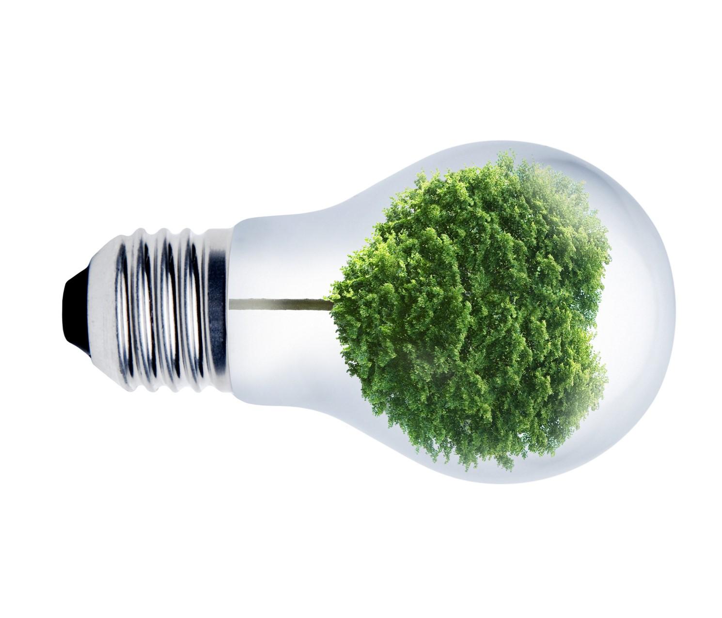 El Buen Comportamiento Ambiental Y El Consumo De Renovables Obtienen Recompensa