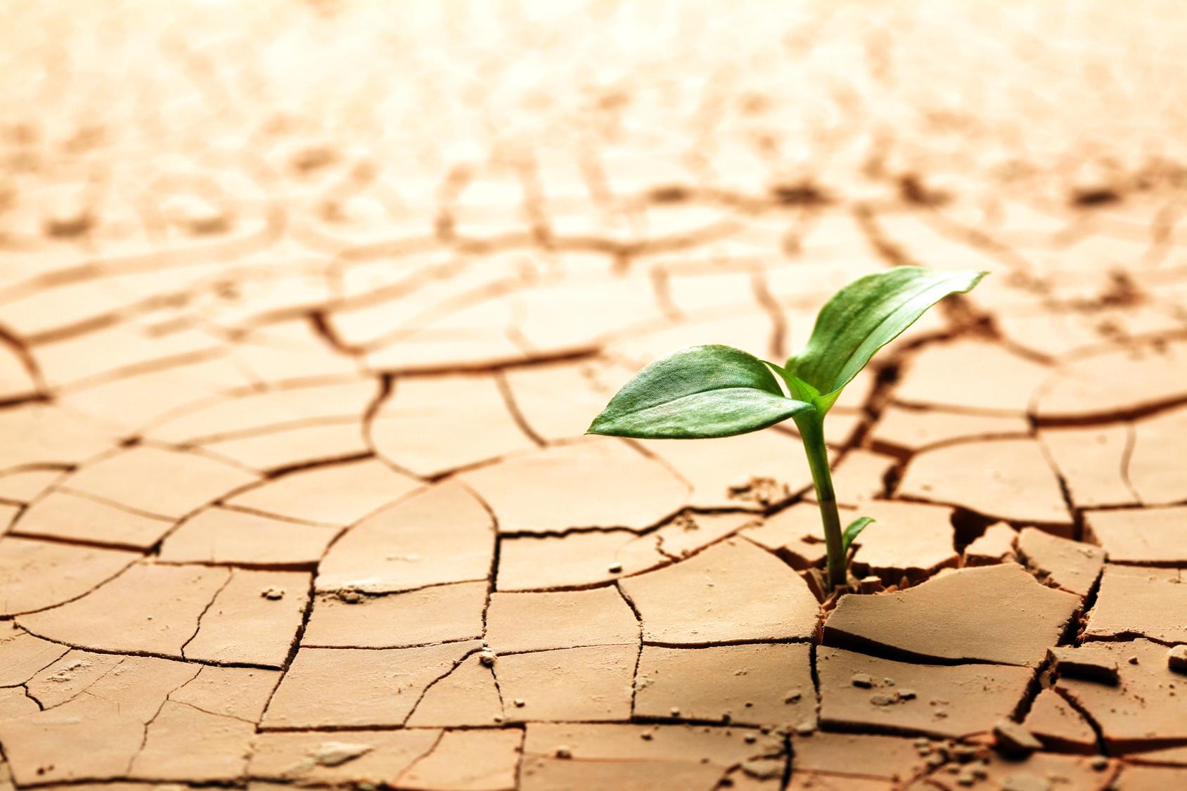 Las Renovables, Una Apuesta Segura En La Lucha Contra El Cambio Climático